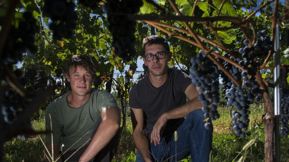 mendrisio-azienda-vitivinicola-fawino-4006-0.jpg