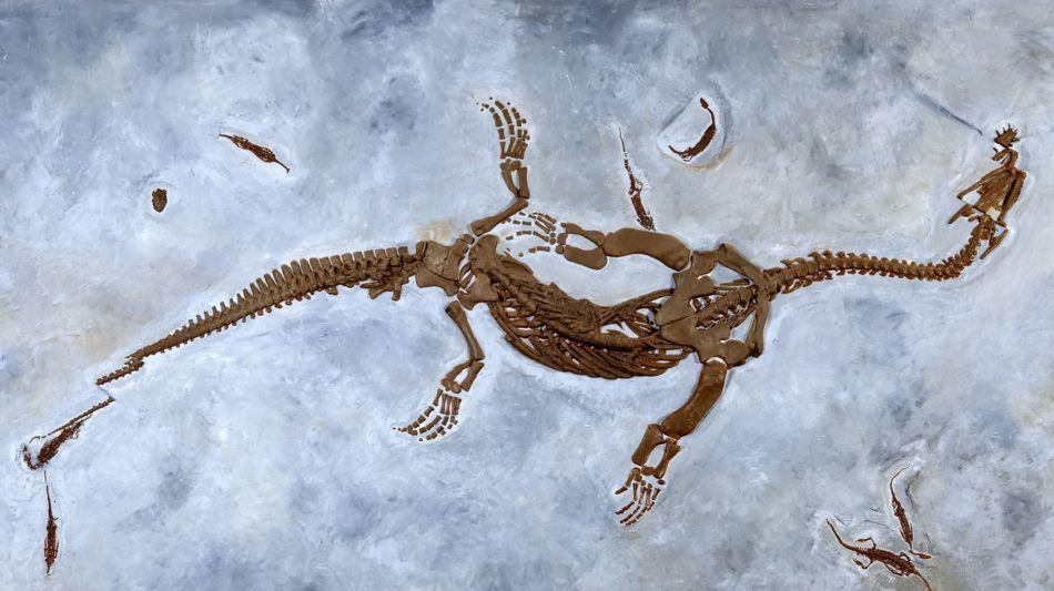monte-san-giorgio-fossili-6458-0.jpg
