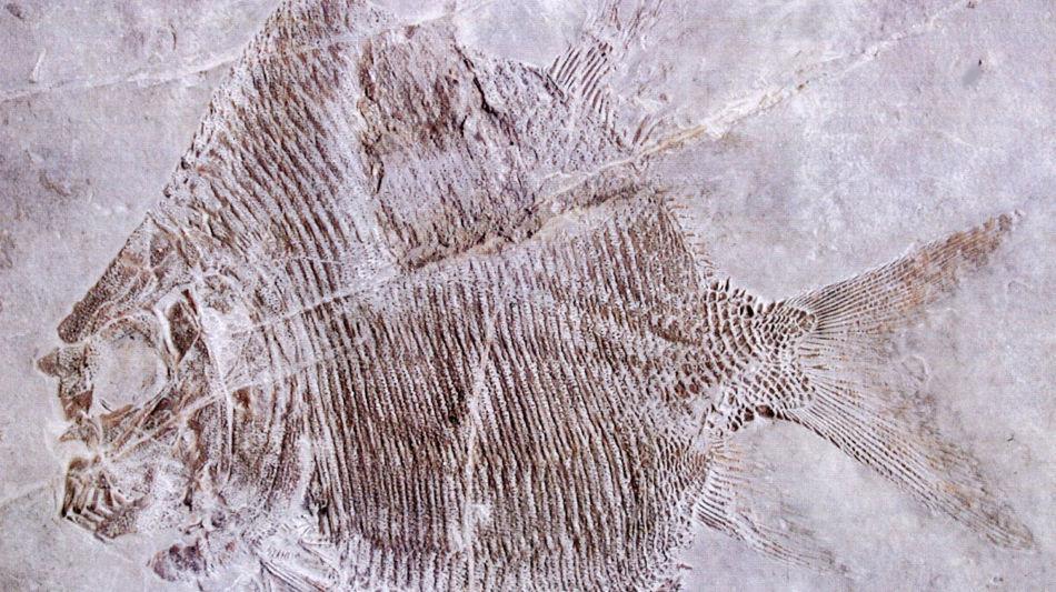 fossili-del-monte-san-giorgio-785-0.jpg