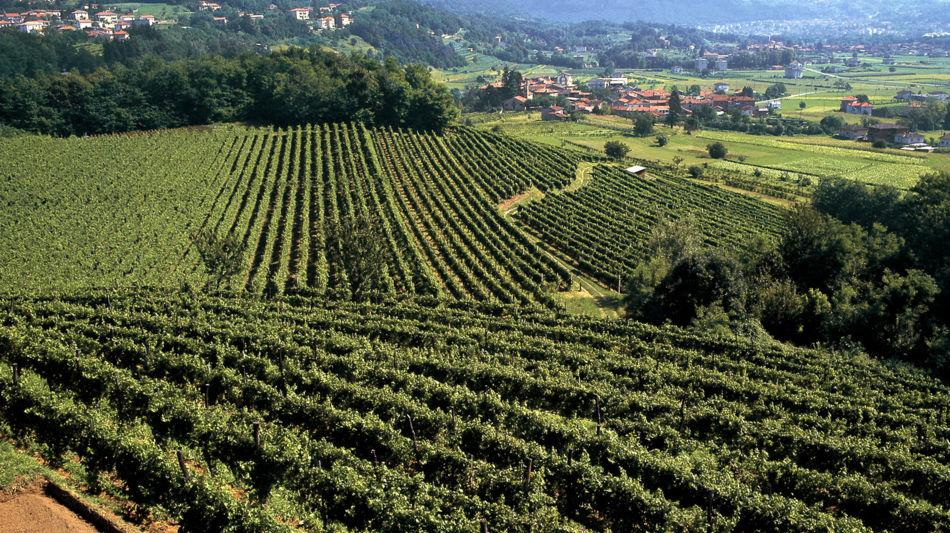 sentieri-viticoli-montalbano-9163-0.jpg