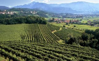 sentieri-viticoli-montalbano-9164-0.jpg