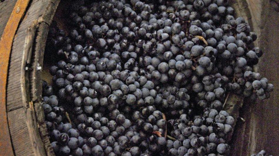 vendemmia-uva-nera-9031-0.jpg