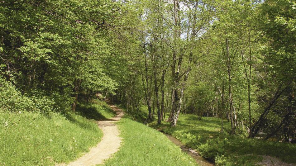 sentiero-delle-meraviglie-3652-0.jpg