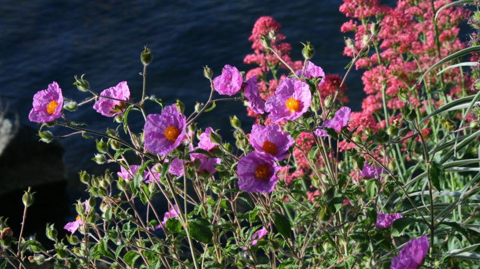 brissago-isole-di-brissago-botanica-1086-0.jpg