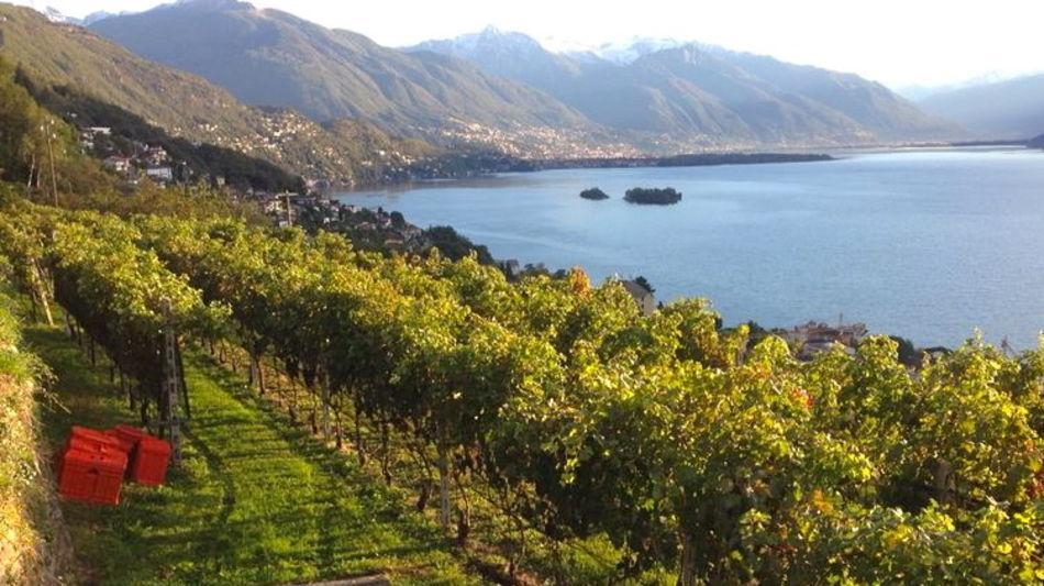 brissago-vitivinicola-fabio-zanini-1154-1.jpg