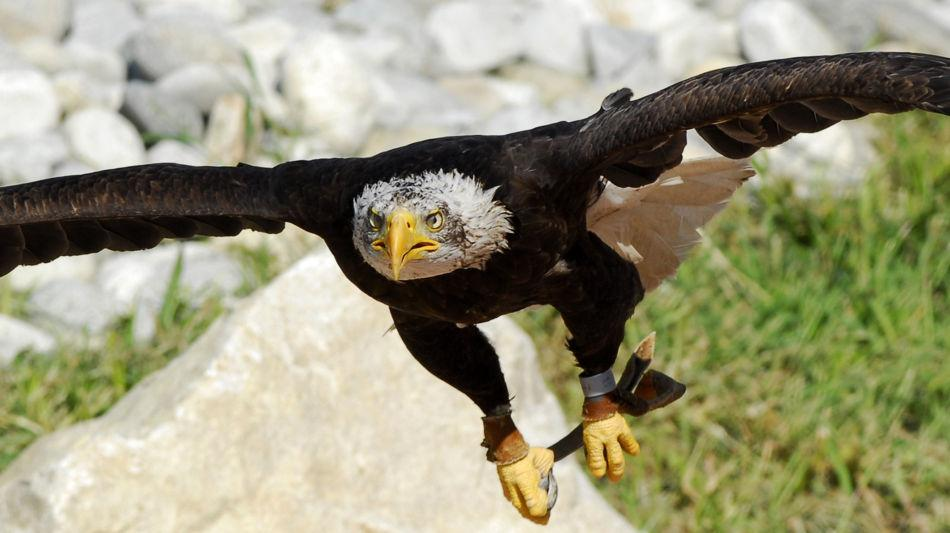 locarno-falconeria-1159-5.jpg