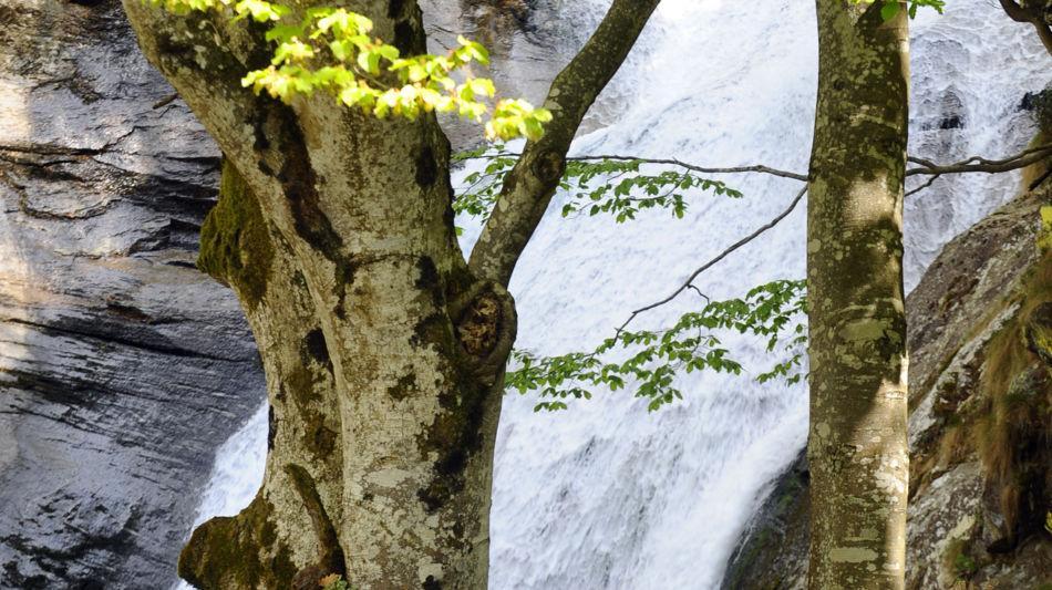frasco-frasco-fiume-efra-1171-0.jpg