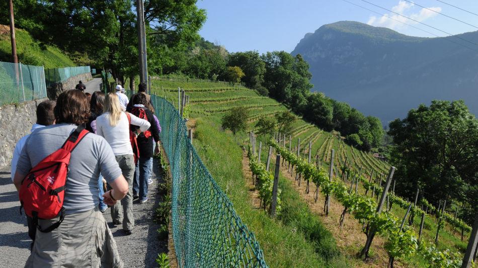 itinerari-viticoli-1169-0.jpg