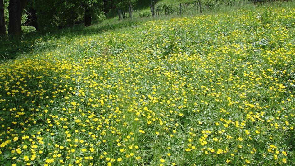 prato-fiorito-1186-0.jpg