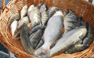 pesce-di-lago-1206-0.jpg