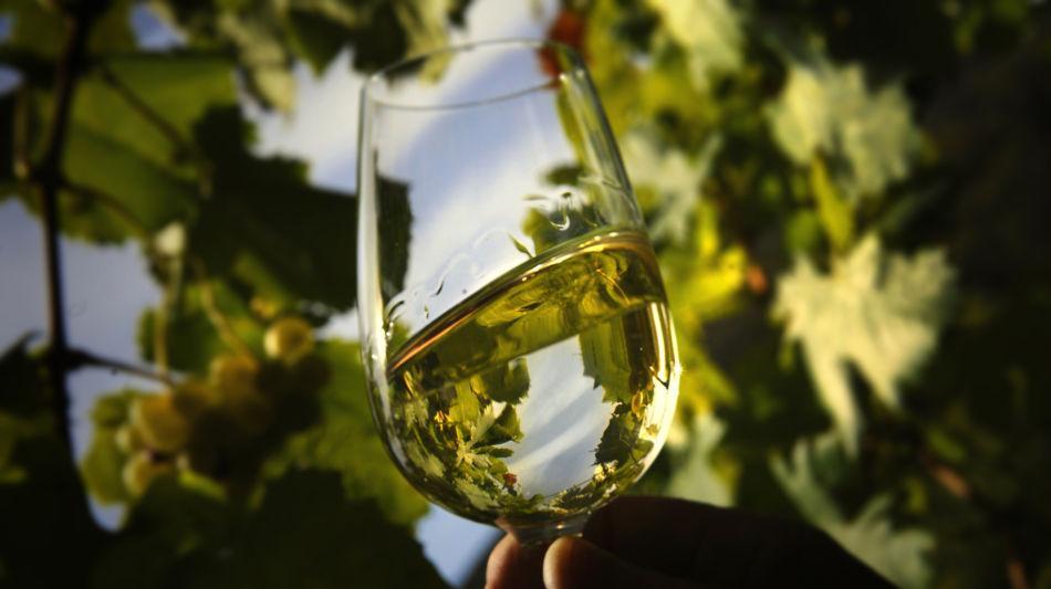 un-bicchiere-di-vino-bianco-in-un-vign-1203-0.jpg