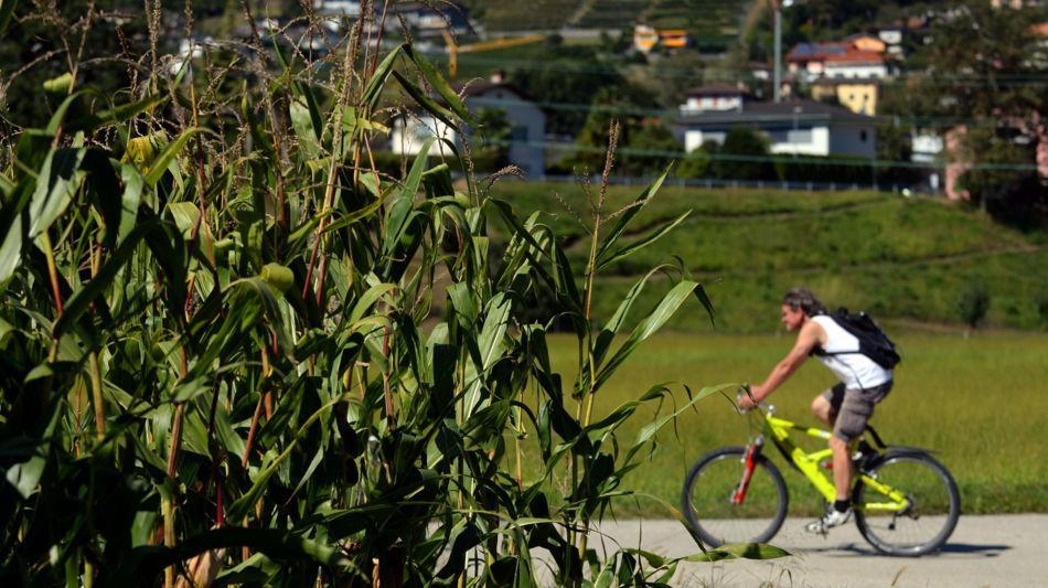bike-7226-0.jpg