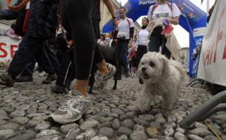 Walking Day und Musik in Locarno