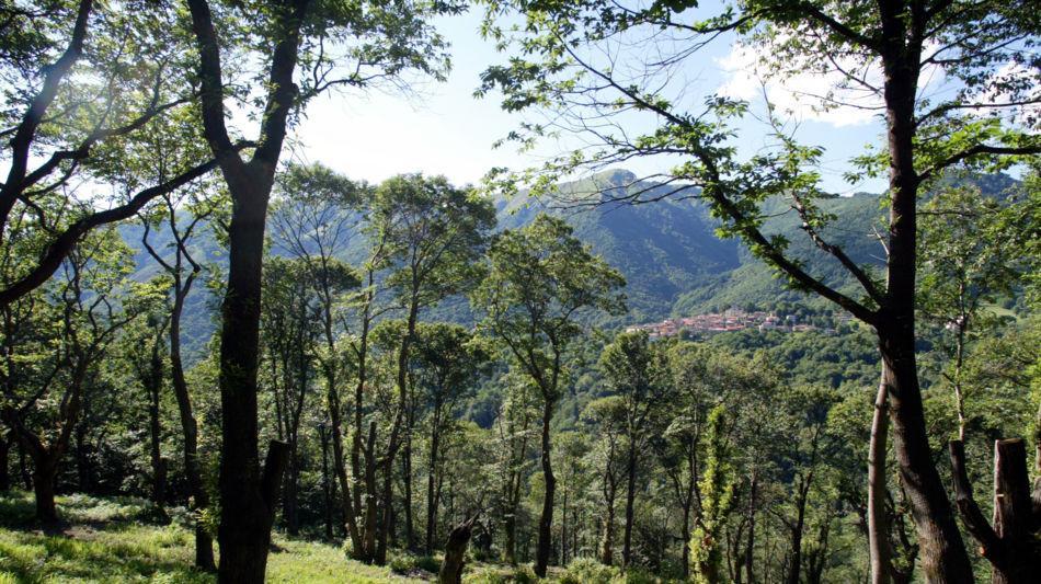 alto-malcantone-bosco-di-castagni-8305-0.jpg