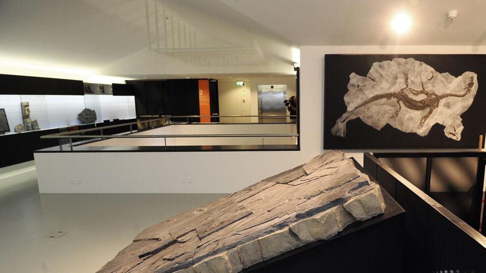 meride-meride-museo-dei-fossili-6460-1.jpg