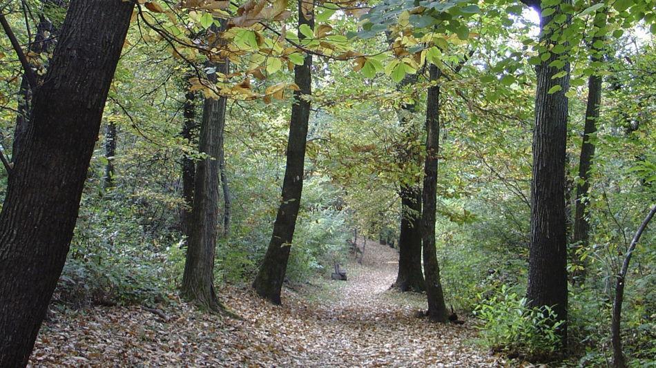 sentiero-nel-bosco-9472-0.jpg
