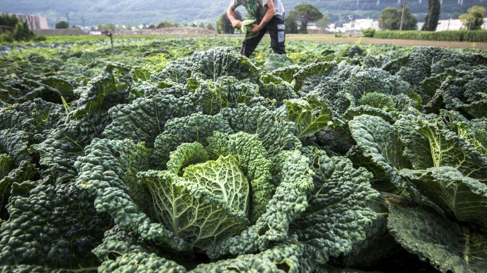 agricoltura-1279-0.jpg