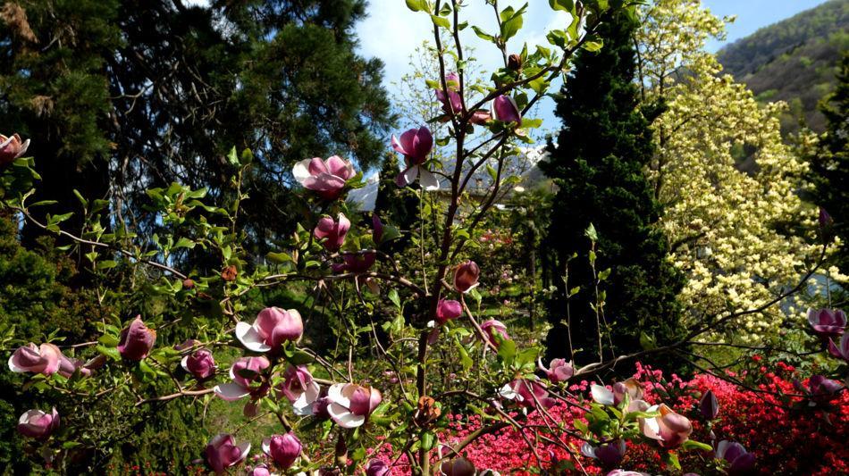 parco-botanico-gambarogno-1078-1.jpg