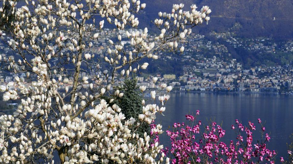 gambarogno-parco-botanico-del-gambarog-1078-0.jpg