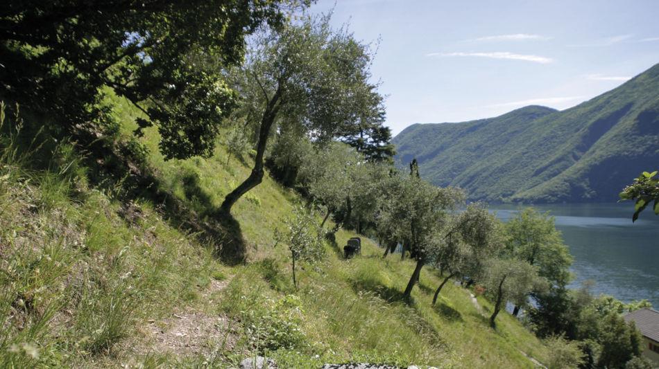 lugano-sentiero-degli-ulivi-1453-0.jpg