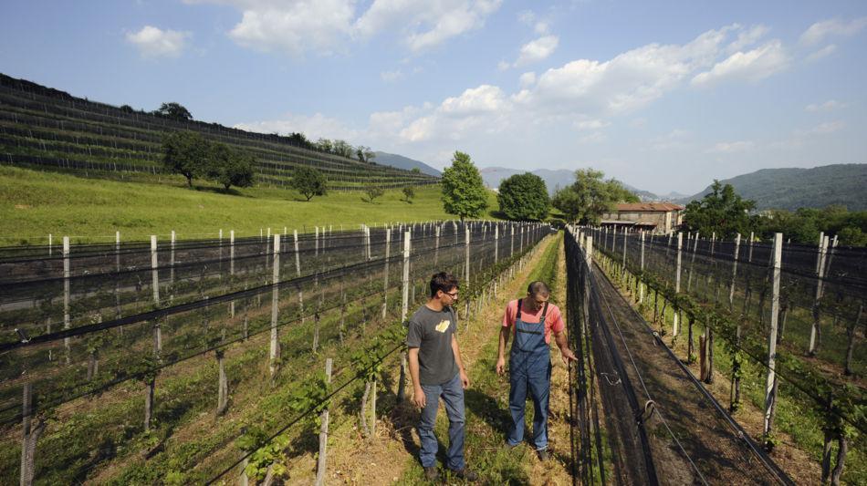 novazzano-azienda-vitivinicola-la-cost-1438-1.jpg