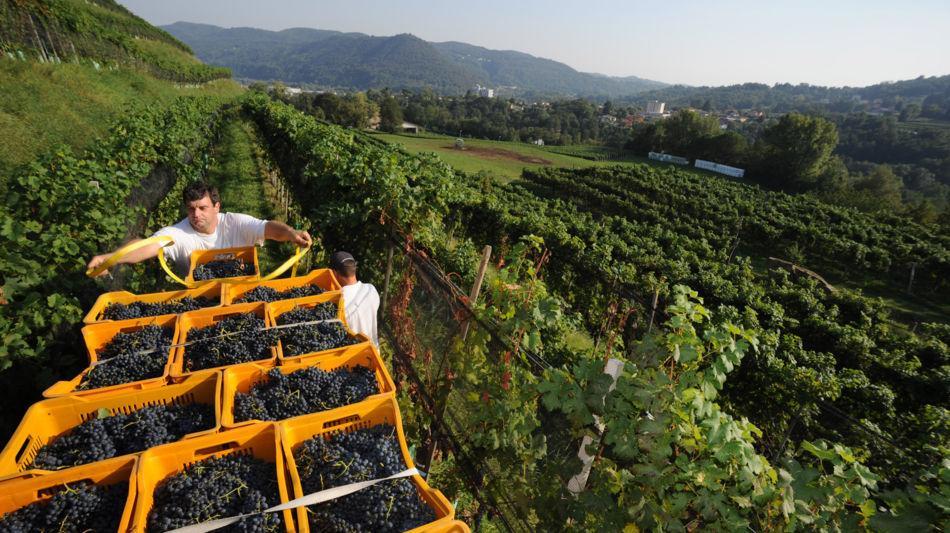 novazzano-azienda-vitivinicola-la-cost-1544-0.jpg