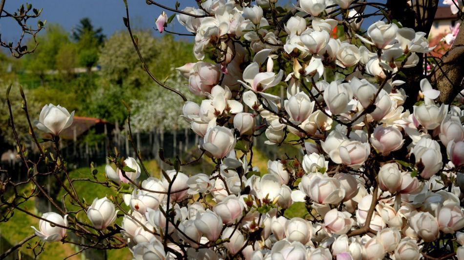 parco-botanico-gambarogno-1078-0.jpg