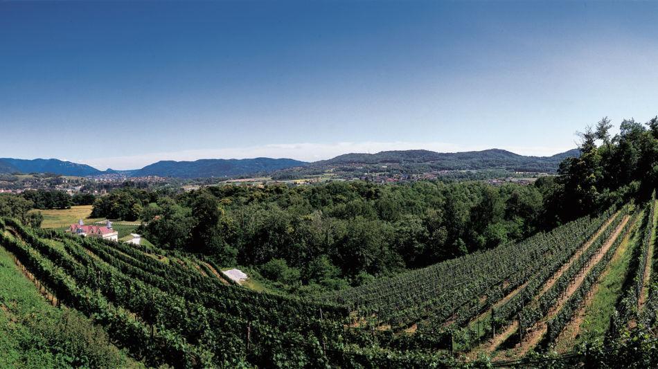 besazio-sentieri-viticoli-1469-0.jpg