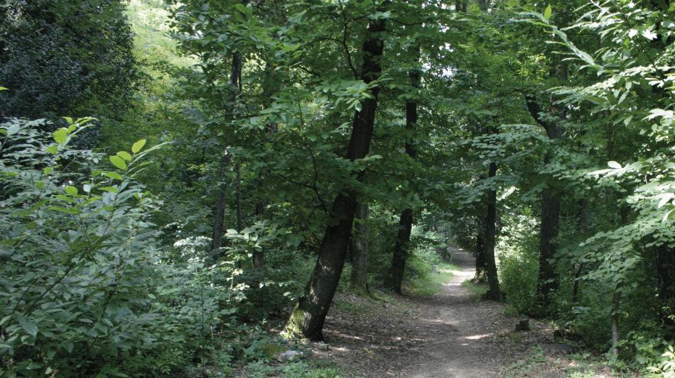 hermann-hesse-sentiero-9475-0.jpg