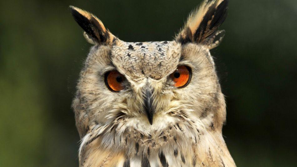 locarno-falconeria-1492-1.jpg