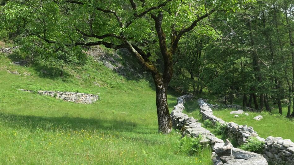sentiero-in-vallemaggia-1458-0.jpg