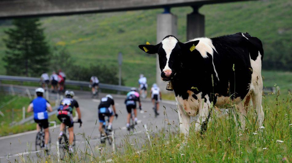 airolo-airolo-ciclisti-mucca-1276-0.jpg