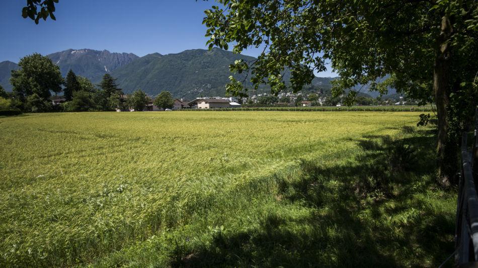 ascona-terreni-alla-maggia-1524-0.jpg