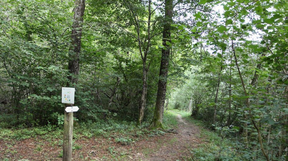 sentiero-delle-meraviglie-1514-1.jpg