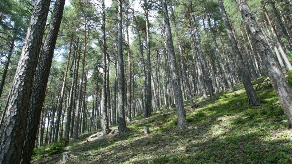 cavagnago-bosco-doss-1578-0.jpg