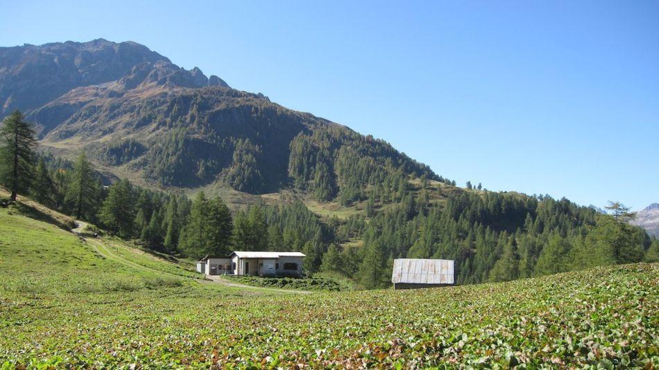 sentiero-degli-alpi-9241-0.jpg