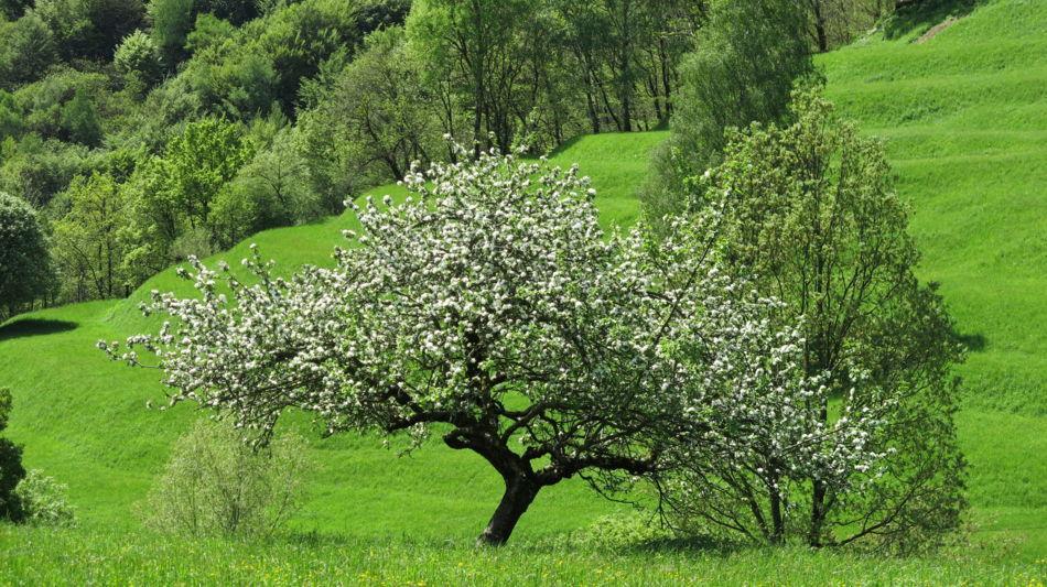 valle-di-muggio-1600-1.jpg