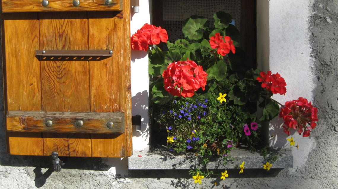 bedretto-strada-degli-alpi-fiori-8506-0.jpg