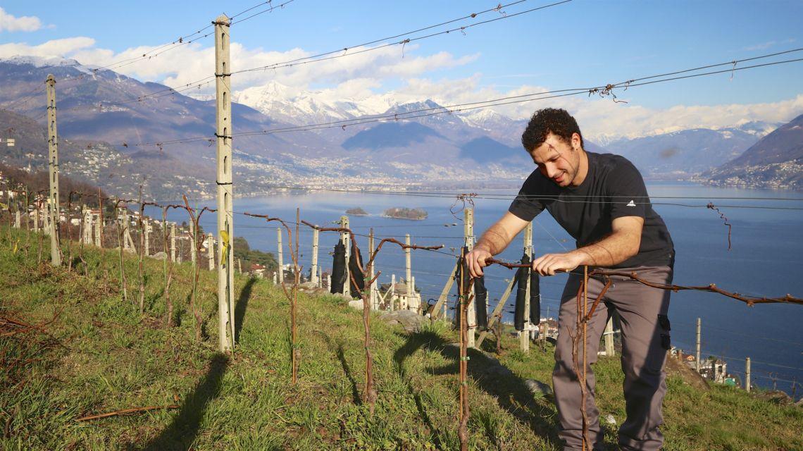 brissago-vitivinicola-fabio-zanini-1676-1.jpg