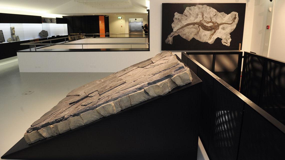 meride-meride-museo-dei-fossili-6460-0.jpg