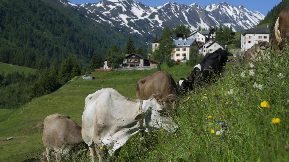 valle-bedretto-1675-0.jpg