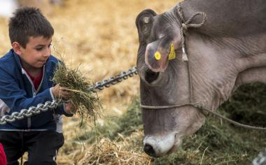Ambrì, wo Kühe und Ponys landen