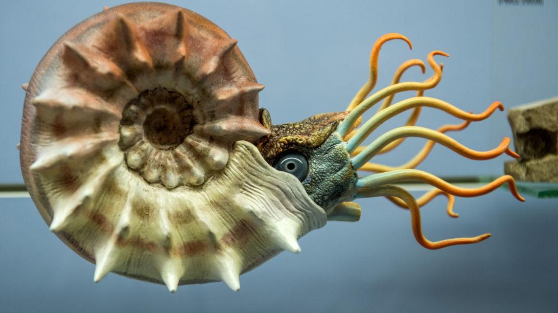 meride-museo-dei-fossili-1735-0.jpg
