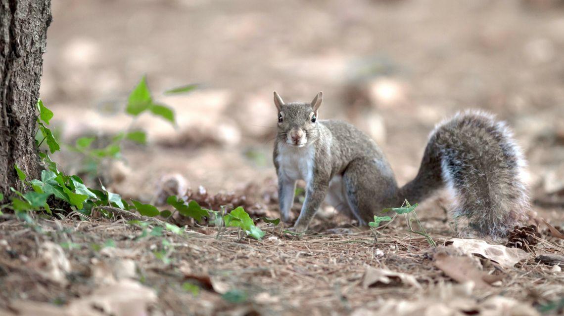 scoiattolo-1731-0.jpg