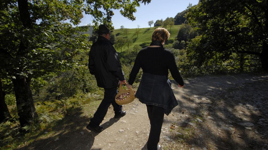 sentiero-del-castagno-9391-0.jpg