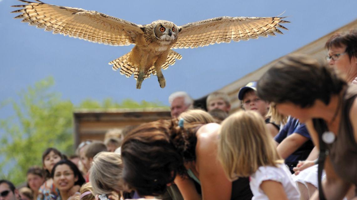 locarno-falconeria-238-0.jpg