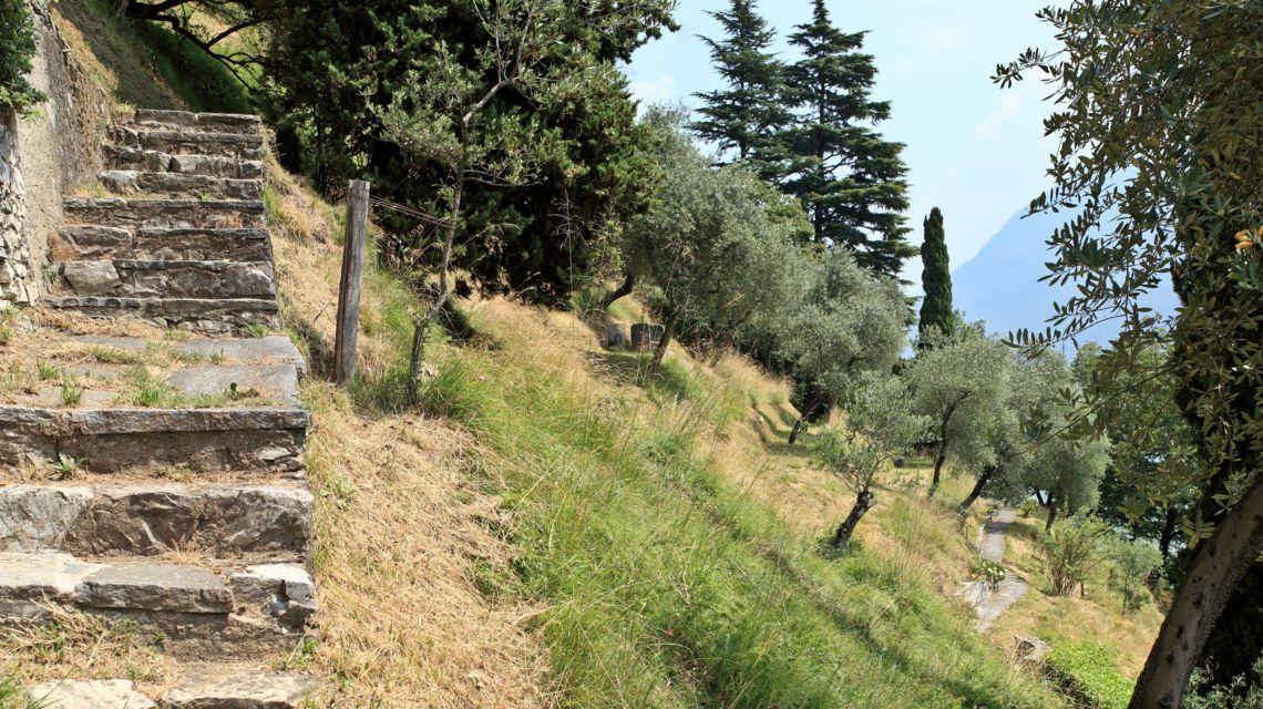 lugano-sentiero-degli-ulivi-1739-0.jpg