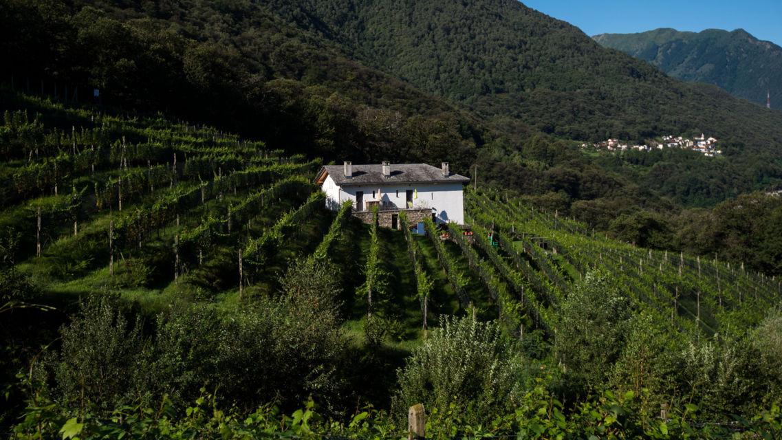 Agriturismo-La-Vigna-17206-TW-Slideshow.jpg