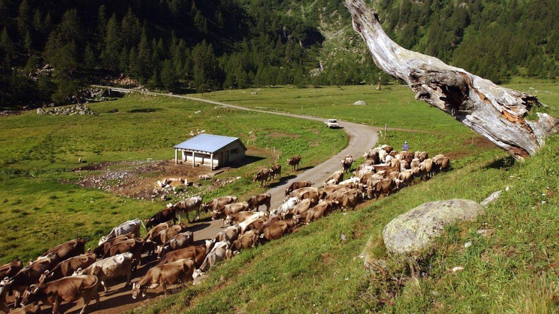 Alpe-La-Torba-9251-TW-Slideshow.jpg
