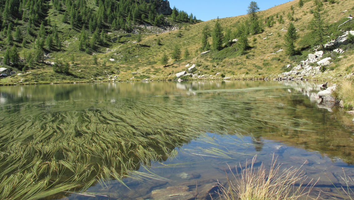 Alpe-Salei-16836-TW-Slideshow.jpg